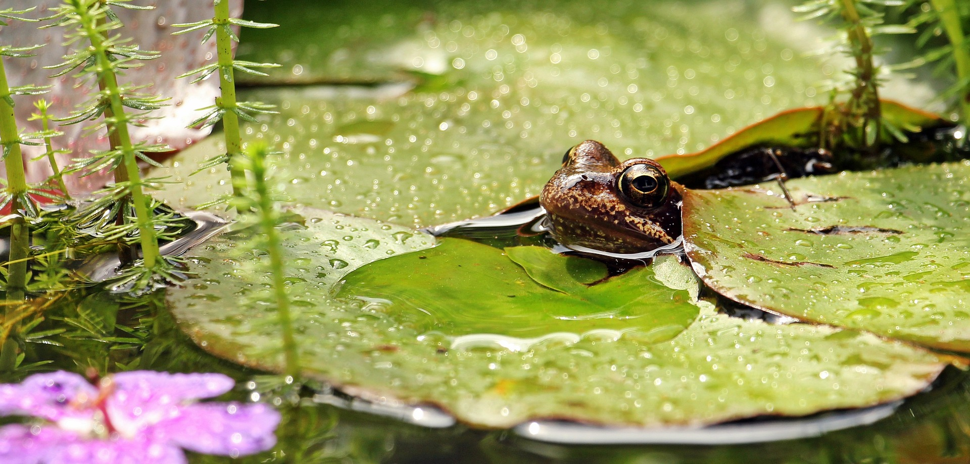 frog-1445496_1920